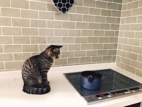 キッチン上の猫