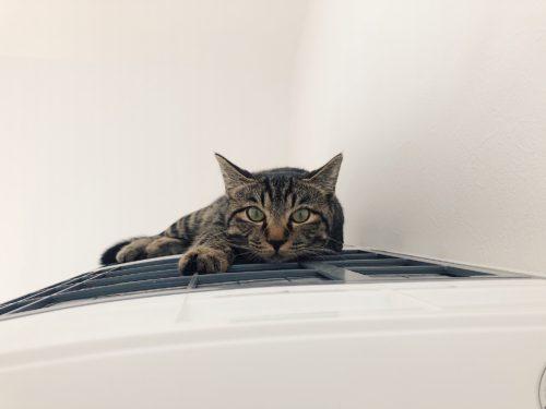エアコンの上の猫